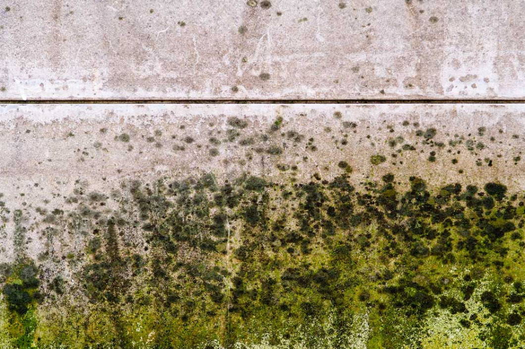 Is Mold Festering in Your Home or Business?